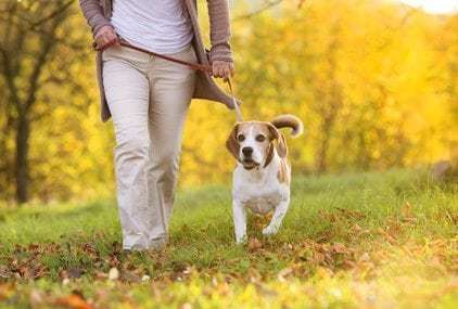 Pet Friendly Assisted Living Facilities